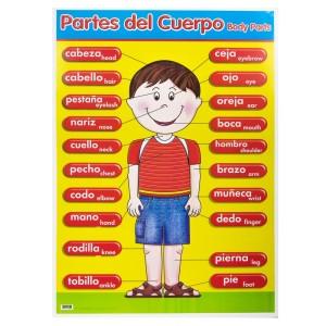 POSTER DIDACTICO GRANMARK 1313-1 70X50CMS PARTES DEL CUERPO (6)