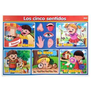 POSTER DIDACTICO GRANMARK 1374-1 70X50CMS LOS CINCO SENTIDOS (6)